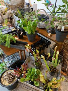 Roots green market2019〜植物と奇怪な仲間たち〜